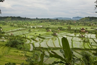 Rice Paddies in Tirta Gangga, East Bali